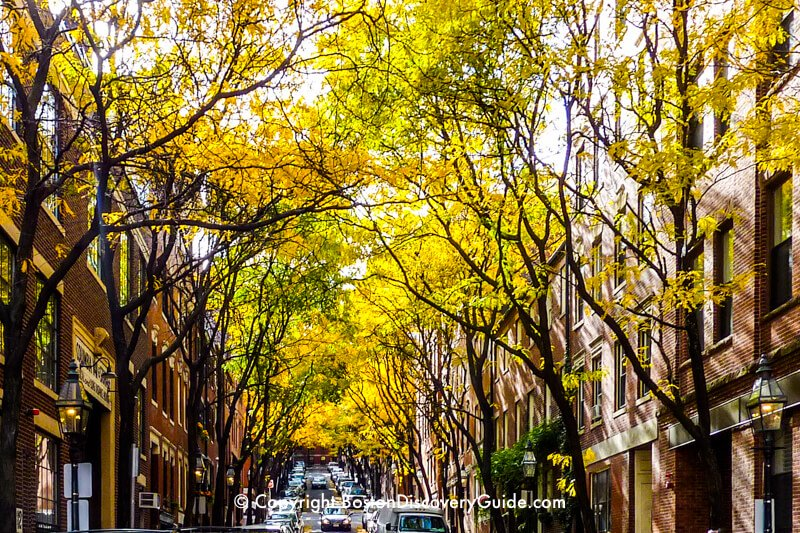 Golden leaves in Boston's historic Bay Village neighborhood