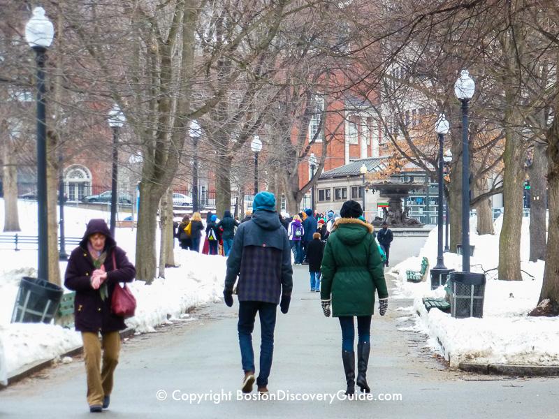 Boston weather in November - Roses in bloom in the Public Garden