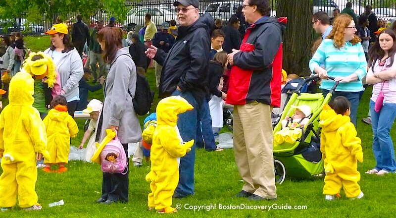 """Ducklings"" lining up for the Duckling Day Parade in the Public Garden"