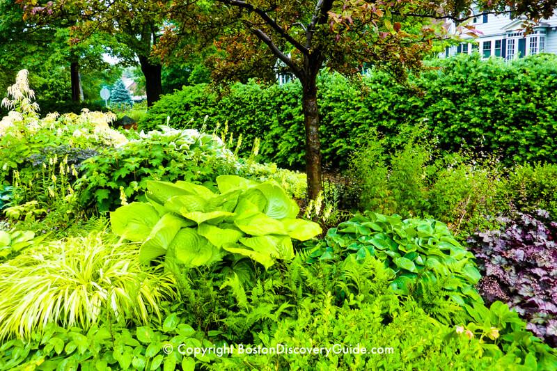 "A ""secret garden"" in June"