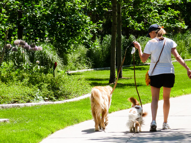 Walking along the Greenway's curving paths
