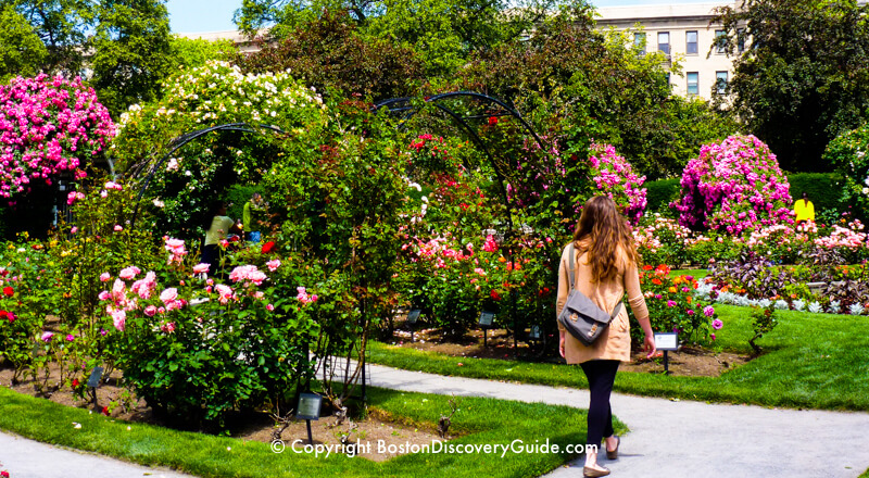 Kelleher Rose Garden, near Fenway Park
