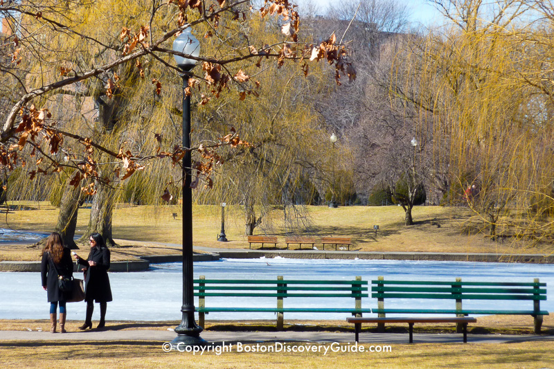 Lagoon in the Public Garden is still frozen