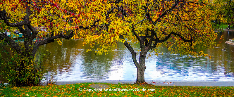Fall foliage around the Lagoon in Boston's Public Garden