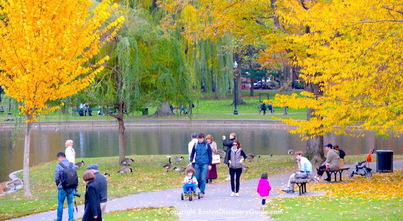 Golden fall foliage by the lagoon in Boston's Public Gardenin mid-October