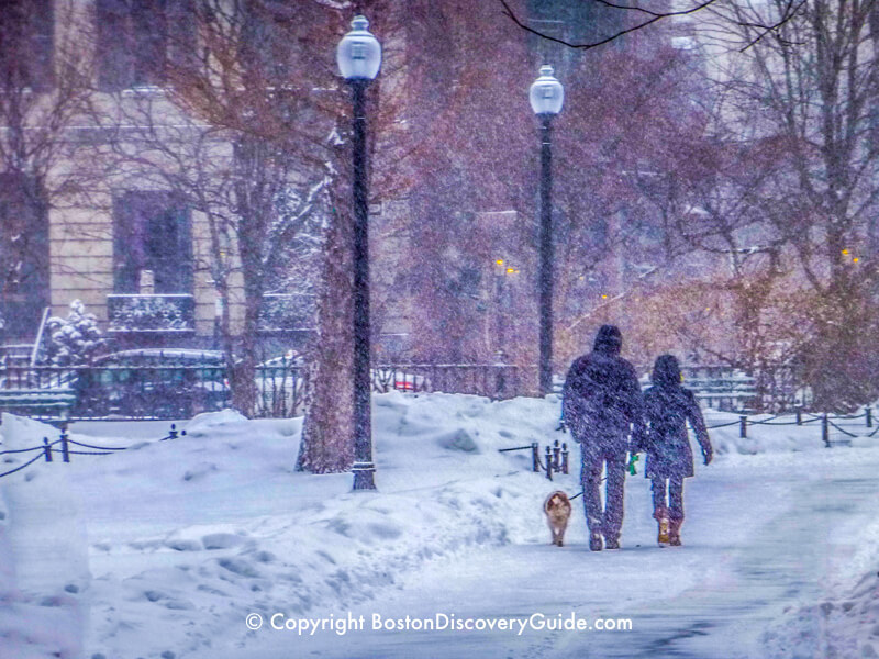 Walking through Boston's Public Garden while heavy snow is falling