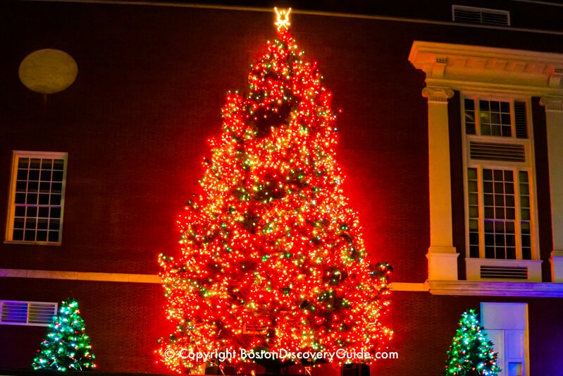 Look up to see Macy's lighted Christmas trees above the huge storefront windows along pedestrian-only Summer Street
