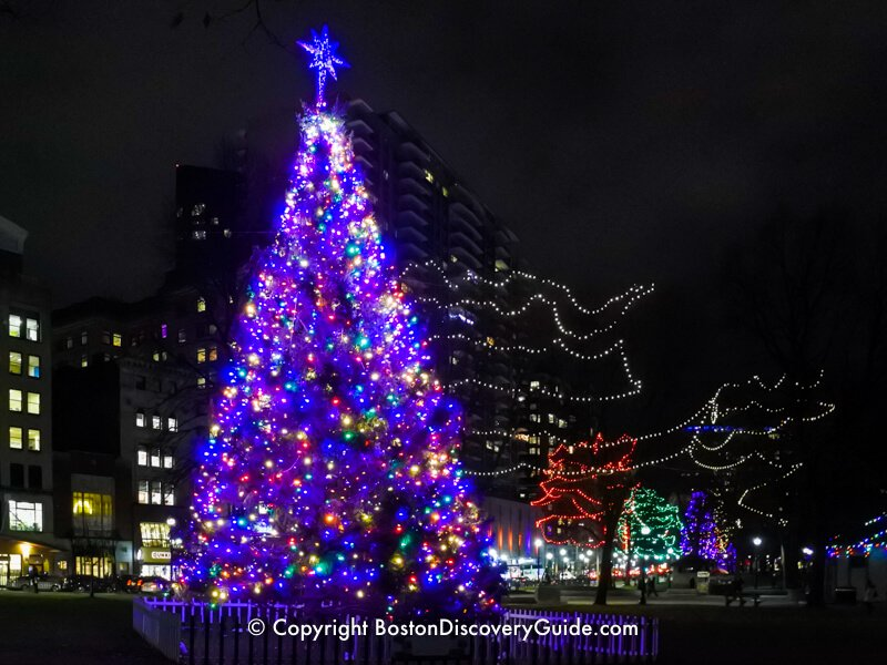 Christmas trees in Boston's Downtown Crossing