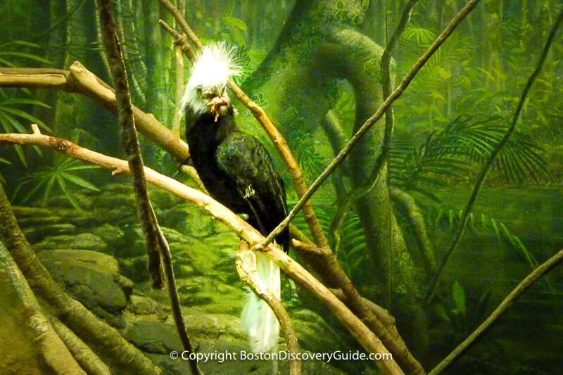 Inside Bird's World at the Boston Zoo