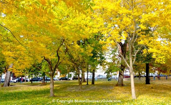 Boston Tourist Tips for October 2013 - Golden foliage on Boston Common