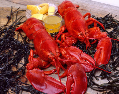 Some Boston dinner cruises feature lobster dinners and New England clambakes