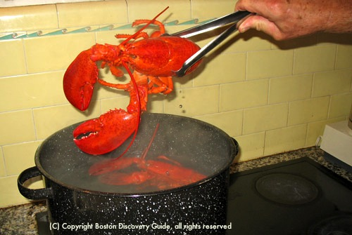 Remove cooked lobster with tongs / How to Boil Lobster - www.boston-discovery-guide.com