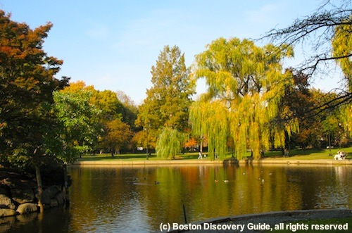 Enjoying fall foliage is one of the best things to do in Boston in October