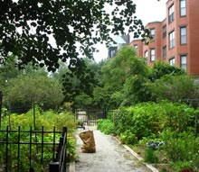 Community Gardens - Boston's South End