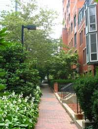 Victorians Along Southwest Corridor Park in Boston's South End
