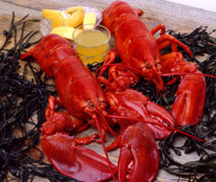 Boiled lobster - a Boston specialty